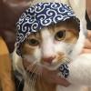 どろぼうひげの猫